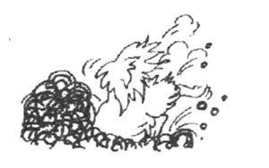 Tibetan Spaniel digging