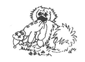 Tibetan Spaniel with toy